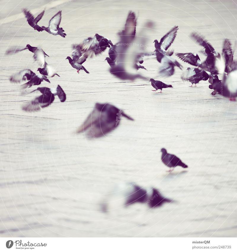 doves. Tier ästhetisch Markusplatz Taube taubenblau fliegen Abheben Flügel Vogel viele Momentaufnahme Alltagsfotografie trist Plagegeist Schädlinge Herde