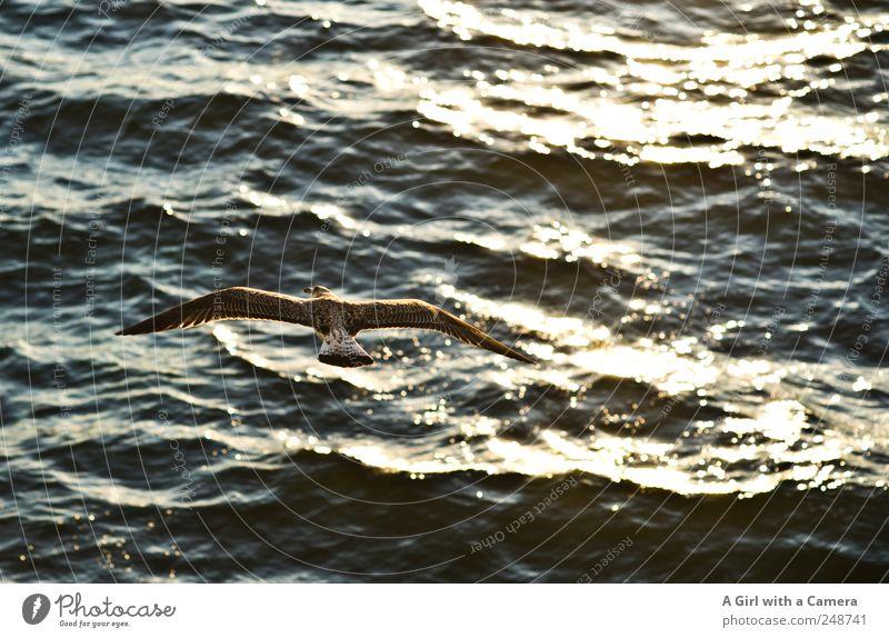 above the surface Natur Wasser Sommer Meer Einsamkeit Tier dunkel Freiheit Umwelt Wellen Vogel fliegen frei Fröhlichkeit wild Urelemente