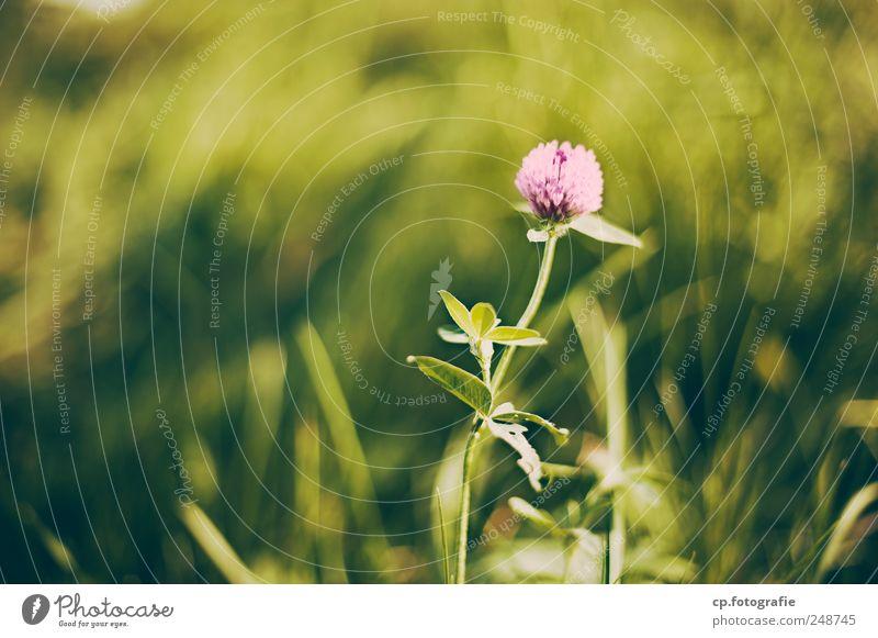standalone Pflanze Sommer Wiese Garten Blüte Frühling Park Schönes Wetter Grünpflanze Frühlingsgefühle Gefühle Blütenkelch