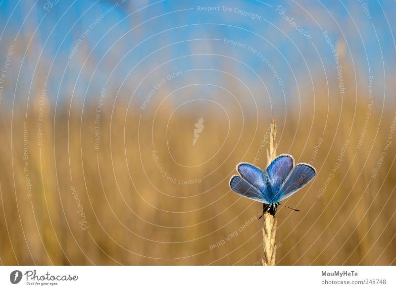 Himmel Natur blau weiß Baum Pflanze Sommer Blume Tier schwarz gelb Gras Horizont Park Erde Feld