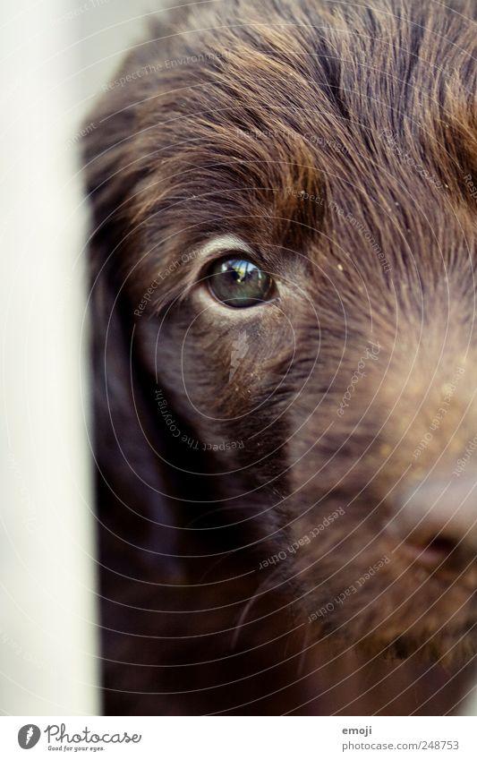 ich bin drinnen und du bist draussen Haustier Hund Tiergesicht 1 braun eingeschlossen gefangen Auge betteln Traurigkeit Tierheim Farbfoto Außenaufnahme Tag