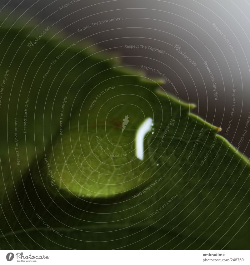 rainy days Umwelt Natur Pflanze Urelemente Wasser Wassertropfen Sommer Blatt nah nass grün Farbfoto Gedeckte Farben Nahaufnahme Detailaufnahme Makroaufnahme