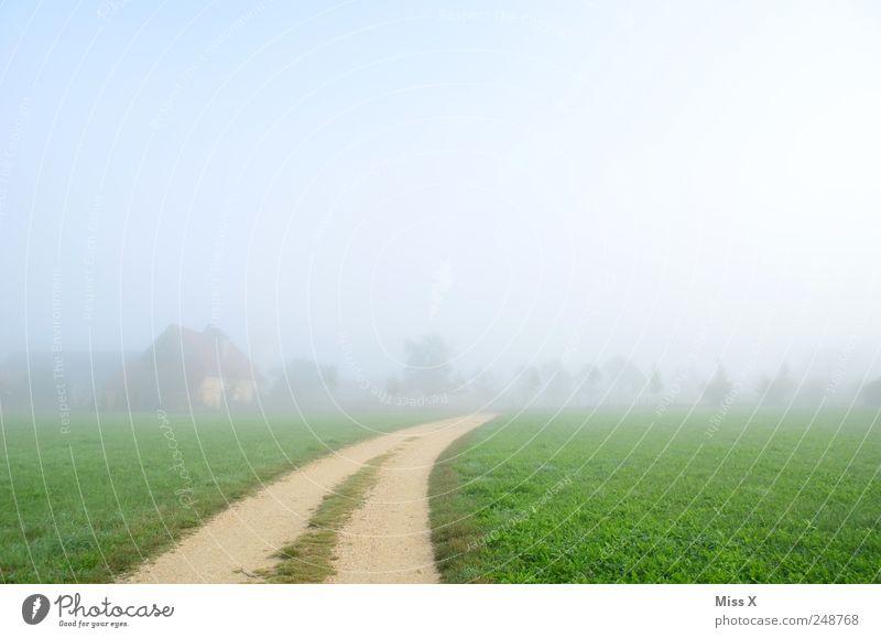 Weg ins Nichts Natur Wolken ruhig Wiese kalt Landschaft Gras Wege & Pfade hell Feld Nebel leer Fußweg herbstlich Nebelschleier Nebelwand