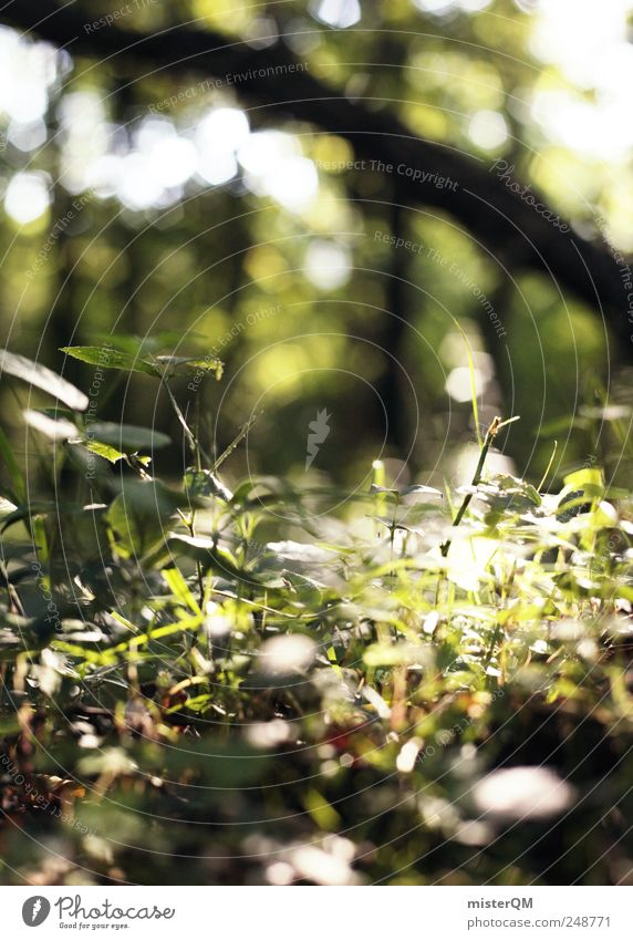 Lichtung. Natur grün Pflanze Wald Umwelt Landschaft Gras hell natürlich ästhetisch Boden entdecken ökologisch Heimat Waldboden Waldlichtung