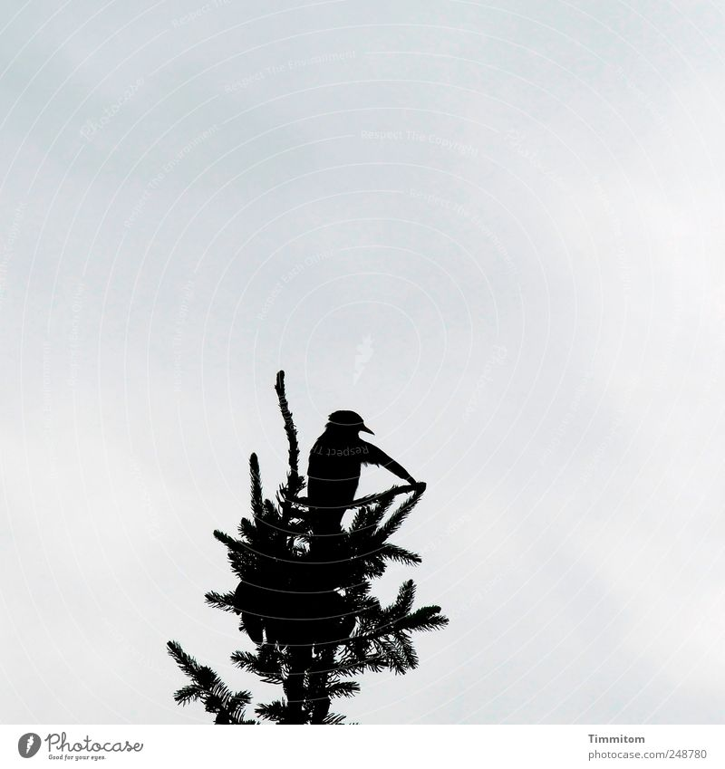 Ich sage Euch: Betti hat Geburtstag! Natur Sommer Baum Wolken Tier Freude schwarz Bewegung außergewöhnlich Vogel Wildtier ästhetisch Weihnachtsbaum Reinheit Fichte Amsel