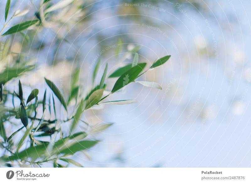 #A# Goldmacher Natur Pflanze Klima Schönes Wetter Garten ästhetisch Oliven Olivenbaum Olivenöl Olivenhain Olivenblatt Olivenernte Zweig grün mediterran