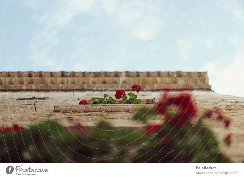 #A# Stadtgarten Haus Hütte ästhetisch Frankreich Provence Fassade Blume Perspektive mediterran südländisch Urlaubsfoto Farbfoto Gedeckte Farben Außenaufnahme