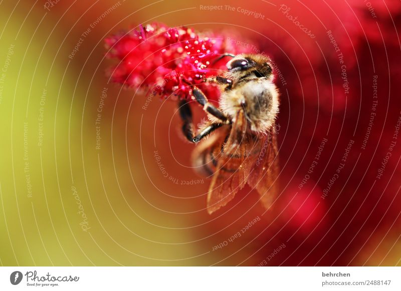 festhalten Natur Sommer Pflanze schön Blume rot Tier Blüte Wiese klein Garten rosa fliegen Wildtier Blühend Flügel
