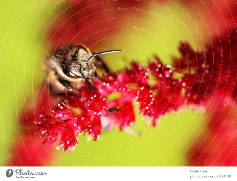 von oben Natur Sommer Pflanze schön Blume rot Tier Blüte Wiese Garten rosa fliegen Wildtier Blühend Flügel Biene