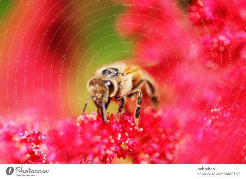 !trash! 2018 | sommerknallerfarbreste Natur Sommer Blume Blüte Prachtspiere Garten Park Wiese Wildtier Biene Tiergesicht Flügel Blühend Duft fliegen Fressen