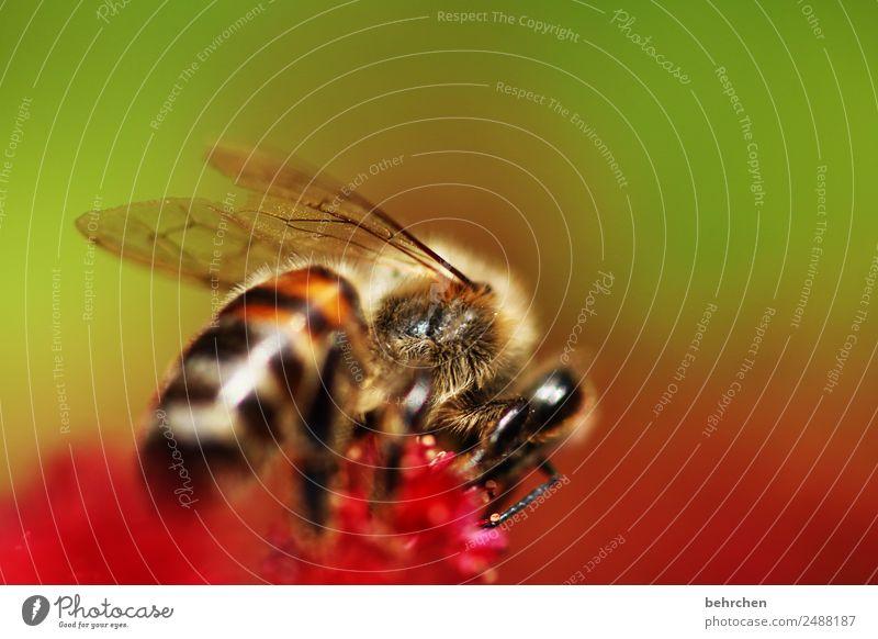 save the bees Natur Sommer Pflanze schön Blume Tier Blüte Wiese Garten fliegen Park Wildtier Blühend Flügel Schutz Insekt