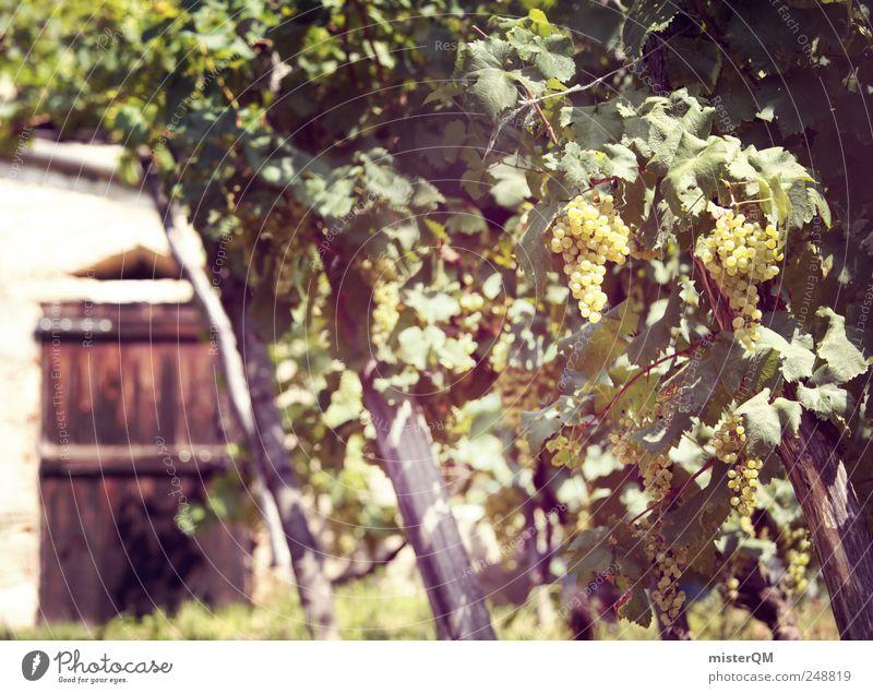 Weingut. Umwelt ästhetisch Weinberg Weintrauben Weinlese Weinkeller Weinbau Italien Qualität Weinpresse grün Farbfoto Gedeckte Farben Außenaufnahme Menschenleer