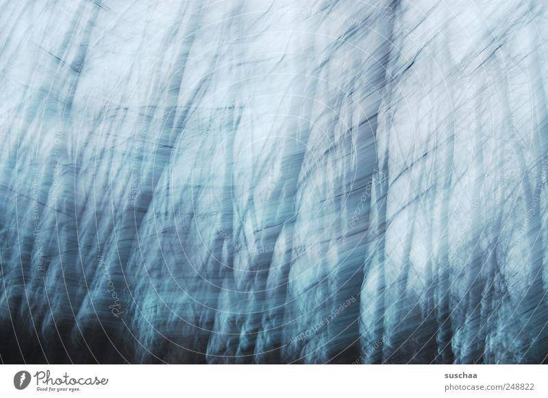 traurig. Umwelt Natur Luft Himmel Herbst Winter Klima Klimawandel Wetter schlechtes Wetter Wind Sturm Baum Wald Holz dunkel kalt blau Traurigkeit Trauer Tod