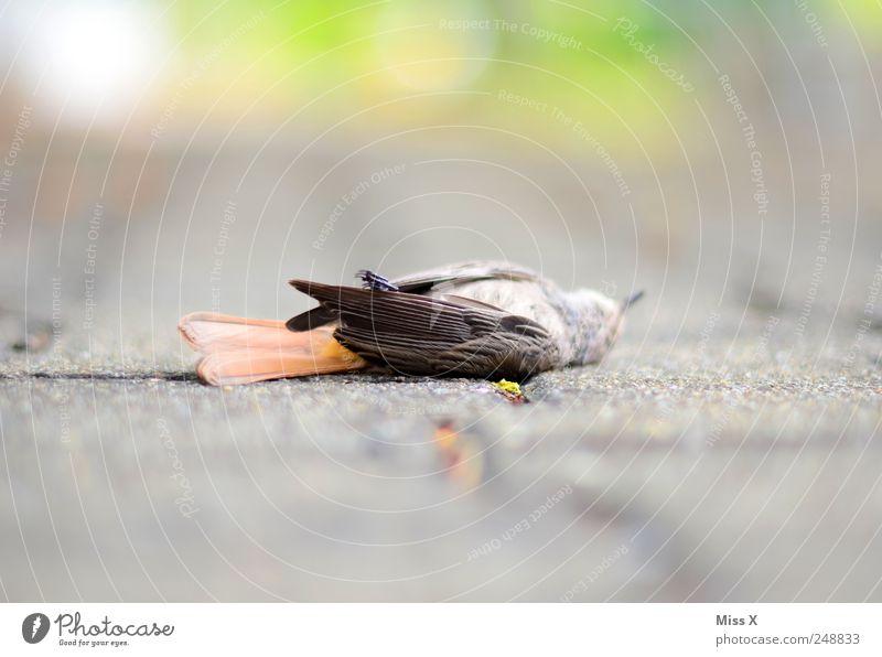 das Leben war bunt Tier Straße Tod Wege & Pfade Traurigkeit Vogel Trauer Feder Wildtier Flügel Spatz Totes Tier