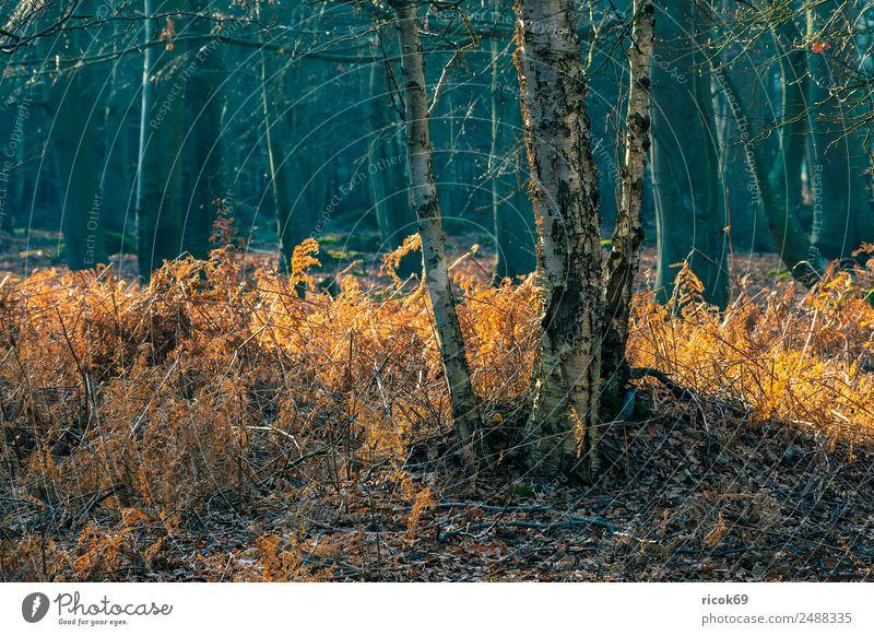 Küstenwald an der Ostseeküste bei Graal Müritz Erholung Ferien & Urlaub & Reisen Tourismus Natur Landschaft Baum Gras Wald Idylle Stimmung Umwelt Torfbrücke