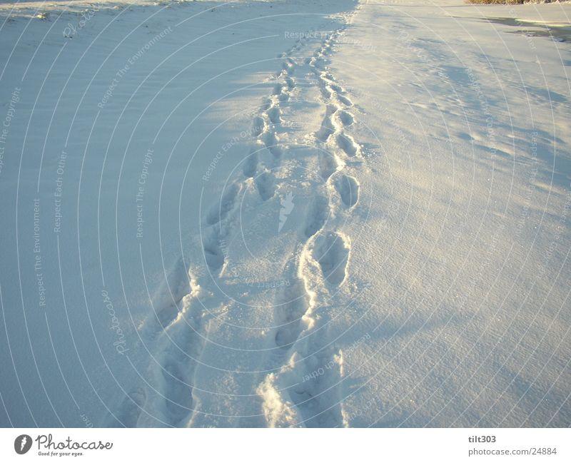 spuren im schnee Schneespur