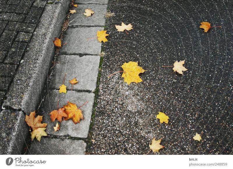 Gold leicht gefallen... Blatt schwarz gelb Straße Herbst dunkel kalt Umwelt grau gold liegen Klima Vergänglichkeit Asphalt Bürgersteig Straßenbelag