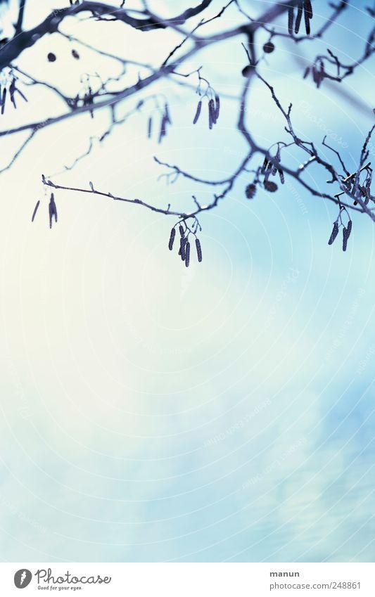 Foto ohne Blätter Natur blau weiß Winter Herbst natürlich Schnee hell authentisch Sträucher Ast einfach herbstlich Zweige u. Äste