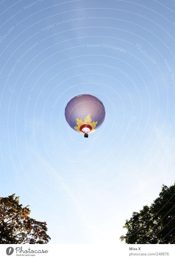 Abendleuchten Baum Luftverkehr Ballone fliegen mehrfarbig hoch fahren Ballonfahrt Ballonkorb Himmel Blauer Himmel Sommer Aussicht Farbfoto Außenaufnahme
