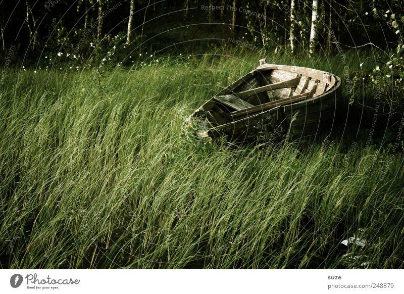 Trockendock Natur grün Einsamkeit dunkel Umwelt Gras Holz Wasserfahrzeug liegen natürlich Schilfrohr Ruderboot Waldrand