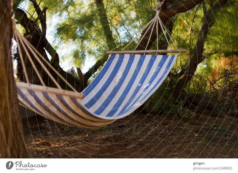 Entspannende Örtlichkeit Linie Erholung Hängematte hängend befestigen Pause Seil Tuch durchhängen Baum Baumstamm angekettet frei unbesetzt Schatten