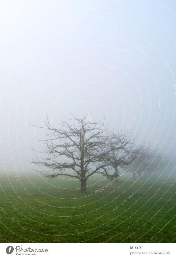 es wird immer dunkler... Natur Landschaft Herbst Winter schlechtes Wetter Nebel Baum Wiese Feld dunkel Nebelschleier Nebelfeld Nebelstimmung Apfelbaum