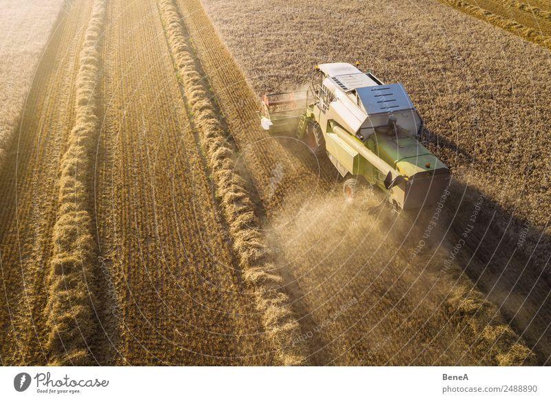 Mähdrescher erntet Getreidefeld im Abendlicht aus der Luft Ernte fahren Landwirt Landwirtschaft Forstwirtschaft Maschine Landwirtschaftliche Geräte Umwelt Natur