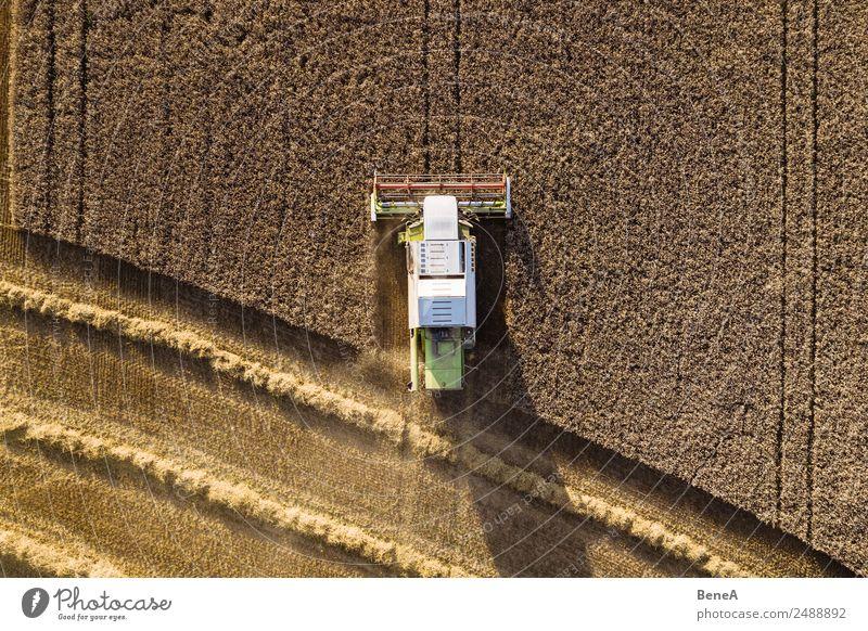 Mähdrescher erntet Getreidefeld im Abendlicht aus der Luft Ernte Landwirt Landwirtschaft Forstwirtschaft Maschine Landwirtschaftliche Geräte Umwelt Natur
