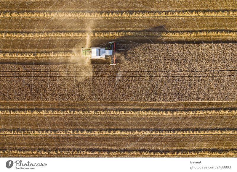 Mähdrescher erntet ein Getreidefeld im Abendlicht aus der Luft Landwirtschaft Forstwirtschaft Maschine Umwelt Natur Landschaft Pflanze Klima Klimawandel Wärme