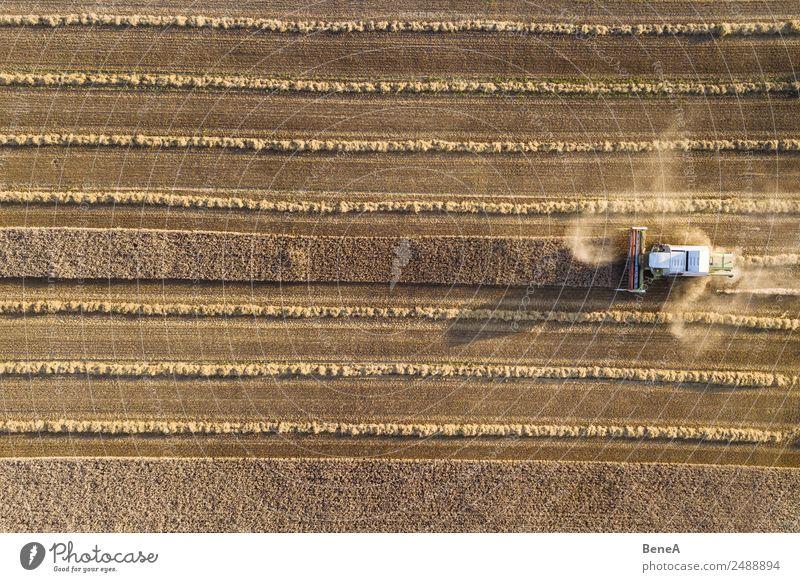 Mähdrescher erntet ein Getreidefeld im Abendlicht aus der Luft Maschine Landwirtschaftliche Geräte Traktor Technik & Technologie Umwelt Natur Landschaft Pflanze