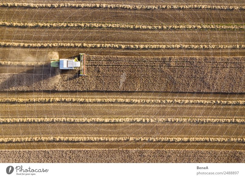 Mähdrescher erntet Getreidefeld im Abendlicht aus der Luft Ernte Landwirt Maschine Landwirtschaftliche Geräte Umwelt Natur Landschaft Pflanze Dürre Nutzpflanze