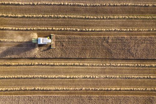 Mähdrescher erntet Getreidefeld im Abendlicht aus der Luft Natur Pflanze Landschaft Umwelt Lebensmittel Arbeit & Erwerbstätigkeit Ernährung Feld Bauernhof