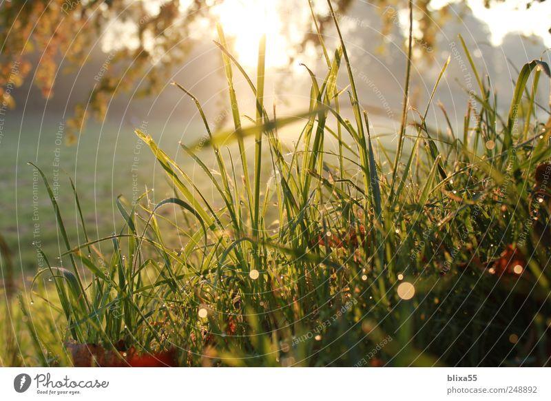 Morgensonne Natur Pflanze Herbst Landschaft Wassertropfen Sträucher Idylle