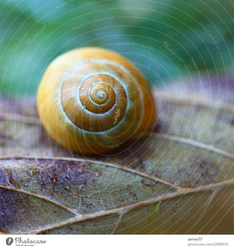 Lebenslinien Natur Pflanze grün Blatt Wald gelb Herbst Wege & Pfade Zeit braun Design Linie Feld Erde ästhetisch Beginn