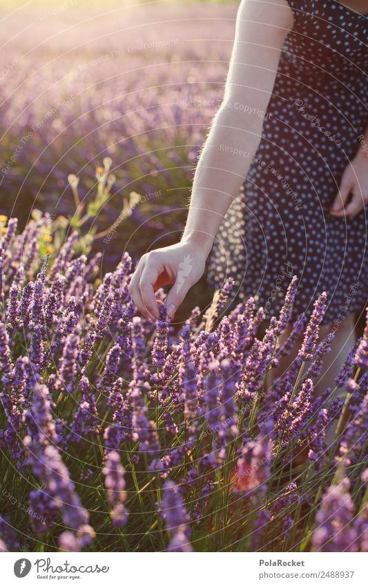 #A# langsam pflücke Frau Natur Pflanze Landschaft Hand Umwelt Feld ästhetisch Idylle Arme fantastisch Blühend violett Kleid Frankreich Fernweh