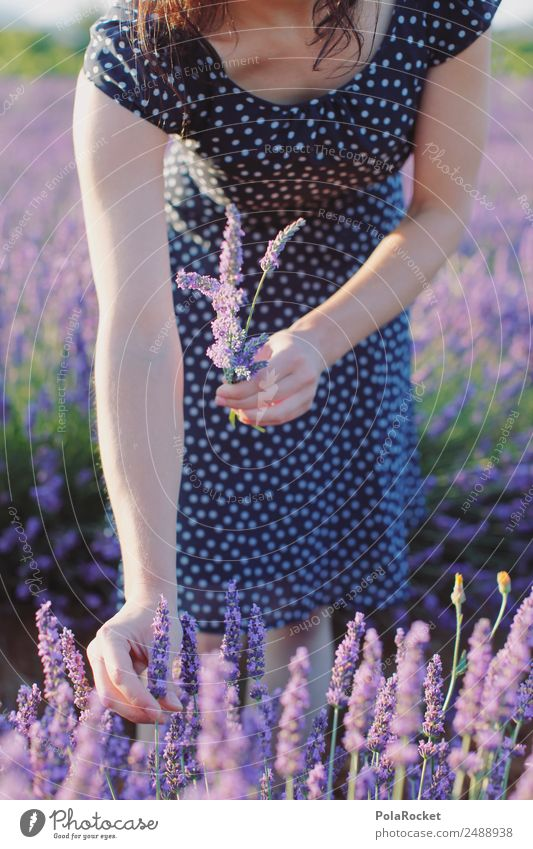 #A# Lavendel pflücken Frau Natur Pflanze Landschaft Mädchen Umwelt feminin Kunst ästhetisch Spaziergang violett Kleid Frankreich zart Ernte