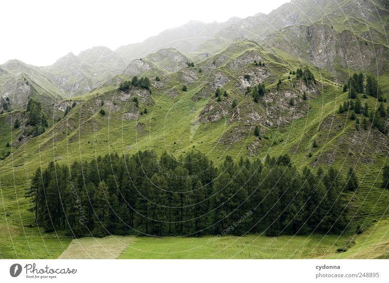 Wald im Stück Ferien & Urlaub & Reisen Tourismus Ausflug Ferne Freiheit Berge u. Gebirge Umwelt Natur Landschaft Nebel Baum Wiese Alpen Gipfel ästhetisch