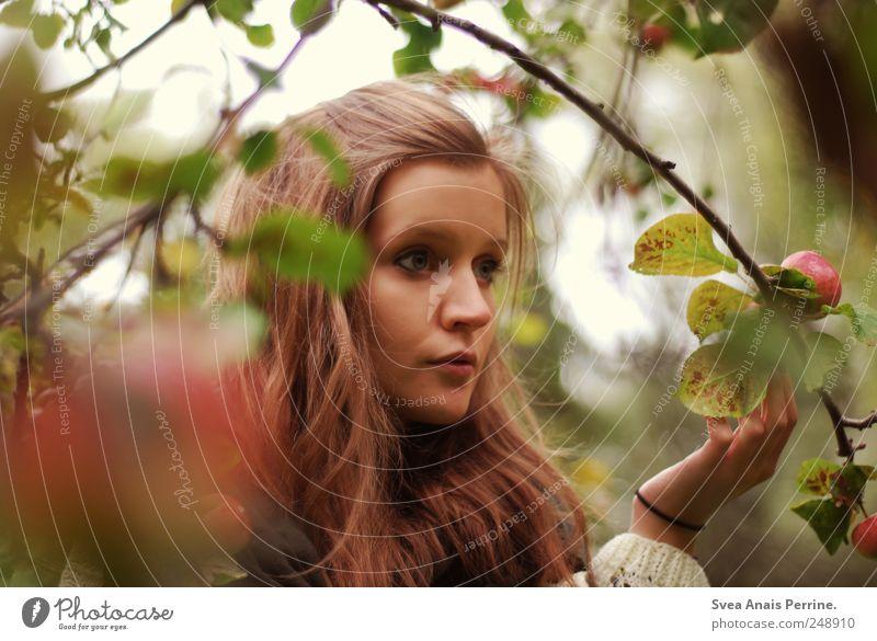 apfelbaum. feminin Junge Frau Jugendliche Haare & Frisuren 1 Mensch 18-30 Jahre Erwachsene Baum Apfelbaum Ast verzweigt Pullover brünett langhaarig natürlich