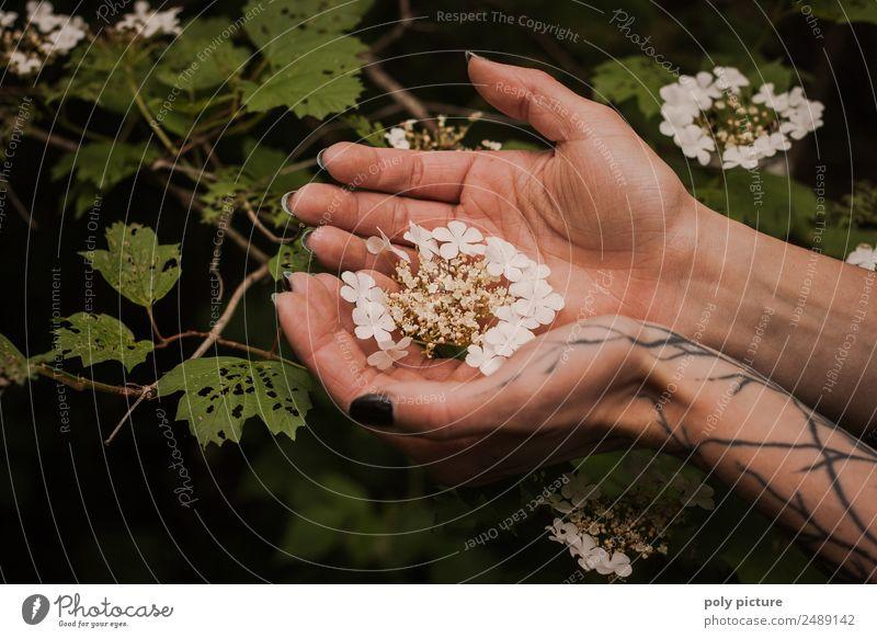 [AM106] - Hand einer tätowierten jungen Dame hällt Blüten Natur Jugendliche Junge Frau Sommer Pflanze Landschaft Baum Blatt Wald 18-30 Jahre schwarz Erwachsene
