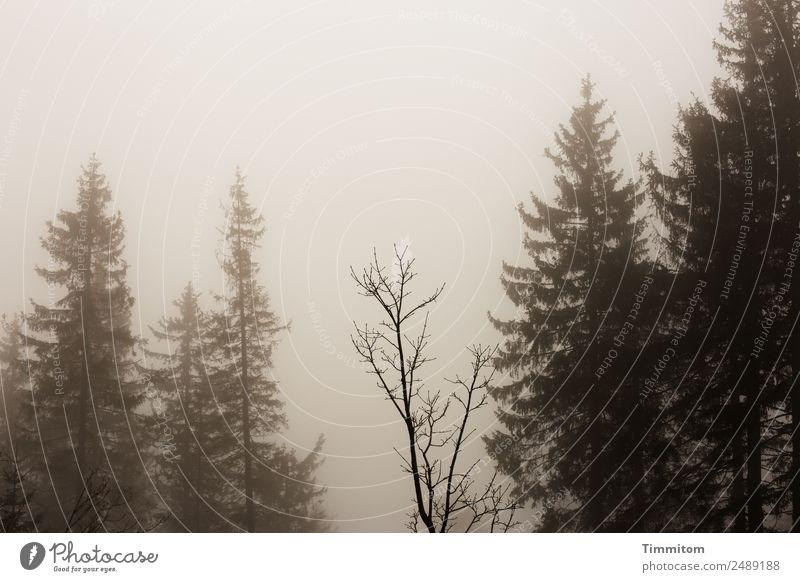 Krimi | Umfeld Umwelt Natur Landschaft Pflanze Himmel schlechtes Wetter Nebel Baum Wald Traurigkeit dunkel braun Angst sepiafarben Sepia Gedeckte Farben
