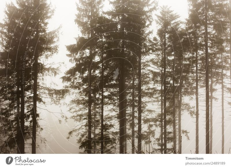 Stimmungsbild Umwelt Natur Landschaft Pflanze Himmel Herbst Winter Wetter Nebel Baum Wald dunkel natürlich Gefühle Schwarzwald Traurigkeit Außenaufnahme