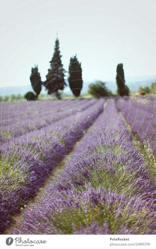 #A# Lila Feld Natur Pflanze Landschaft Umwelt ästhetisch Idylle Schönes Wetter violett Frankreich Reihe Lavendel Provence Lavendelfeld Lavendelernte