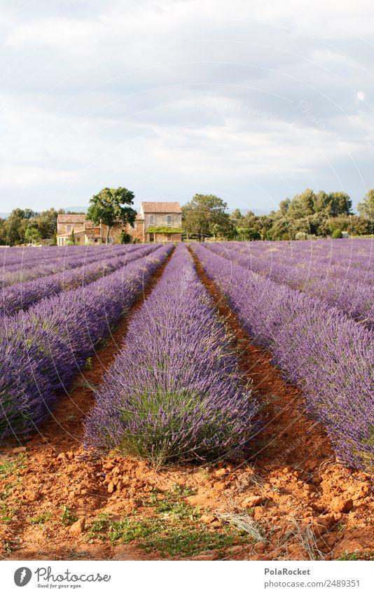 #A# Lila Farm Kunst ästhetisch violett Frankreich Großgrundbesitz Lavendel Provence Lavendelfeld Lavendelernte