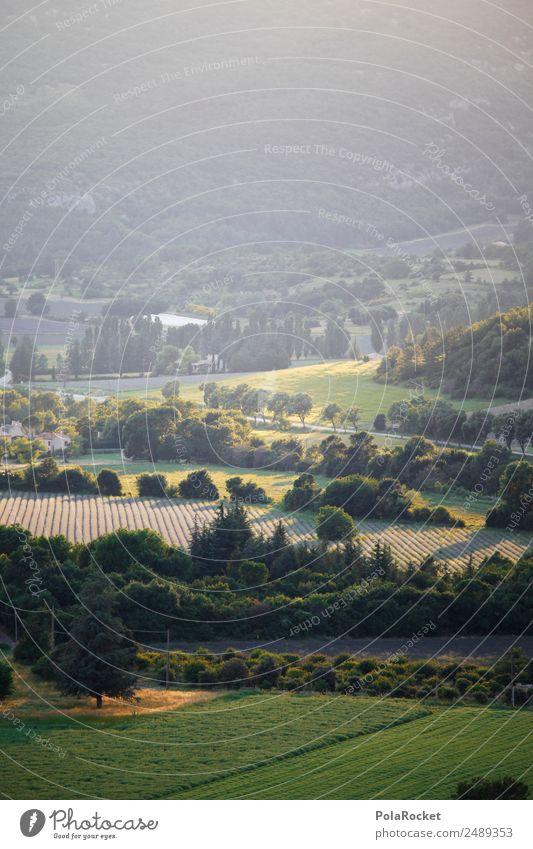 #A# Landgrün Natur Pflanze Landschaft Baum Umwelt Wiese ästhetisch Idylle Schönes Wetter Frankreich Landschaftsformen Provence Lichtstimmung