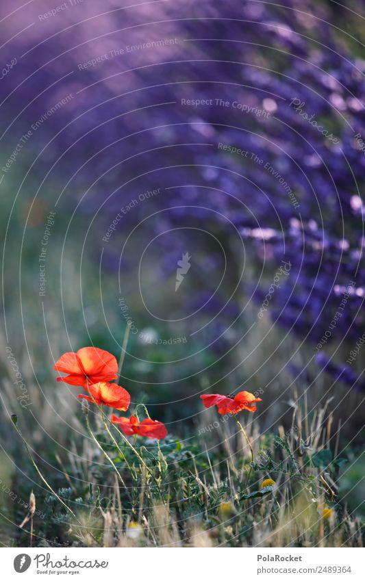 #A# Wegrand Lila-Rot Natur Pflanze grün Landschaft rot Tier Umwelt Wiese Garten Park Feld ästhetisch Idylle Schönes Wetter Klima violett