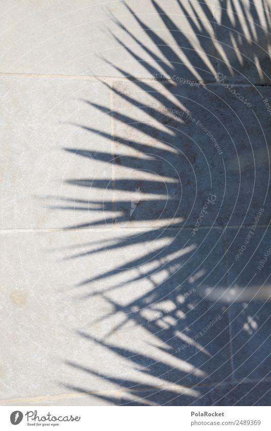 #A# SchalmenPatten Natur ästhetisch Schönes Wetter Spitze Palme Karibik Schattenspiel Palmenwedel