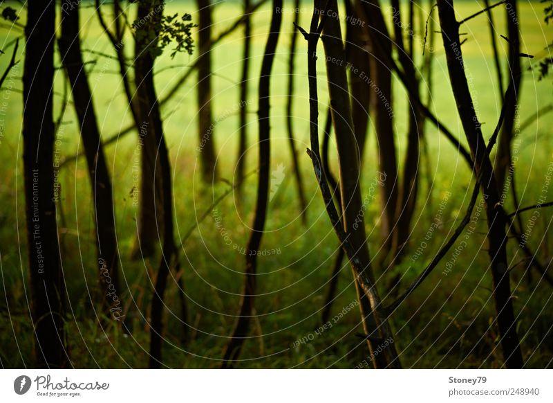 Waldrand Natur Landschaft Sommer Schönes Wetter Baum Gras Wiese grün ruhig chaotisch geheimnisvoll Gelassenheit Farbfoto Außenaufnahme Menschenleer