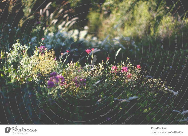 #A# Lichtung Umwelt Natur ästhetisch Blume Naturschutzgebiet Naturerlebnis Waldlichtung Schatten Schattenspiel Lichtspiel Wiese Gras Wiesenblume Frankreich