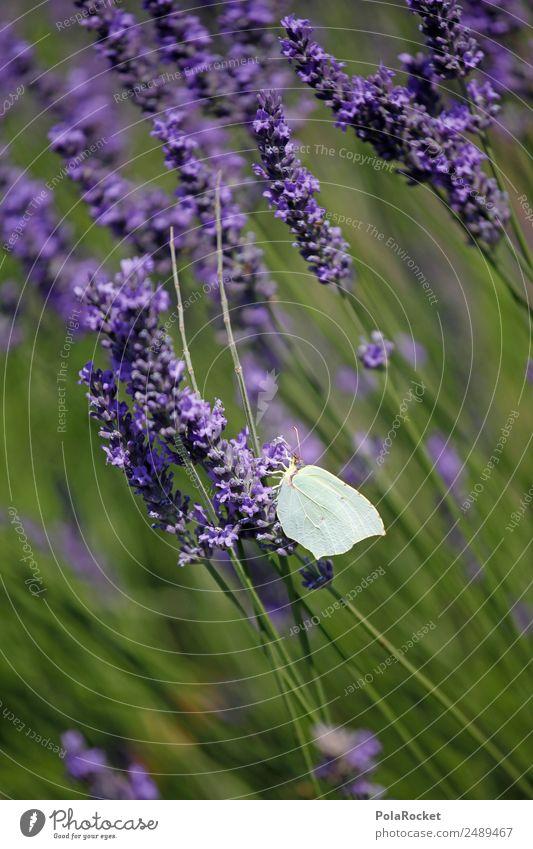 #A# Leichtwesen Natur Pflanze grün Landschaft Tier Umwelt Wiese Garten Zufriedenheit Park Feld ästhetisch Wind Schönes Wetter Klima violett