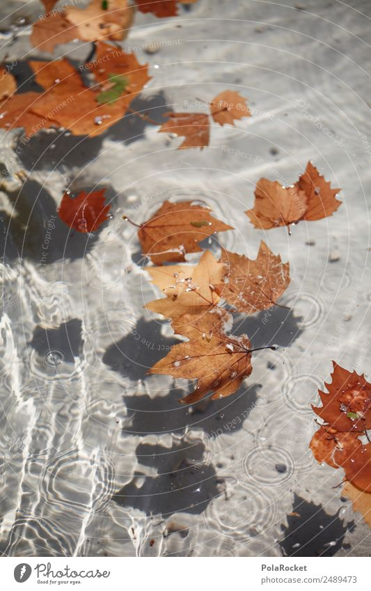 #A# Herbstwasser Umwelt ästhetisch Wasser Wasseroberfläche Blatt blättern braun herbstlich Herbstlaub Herbstfärbung Herbstbeginn Herbstwetter Farbfoto